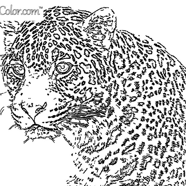 Leopard Stare Coloring Page