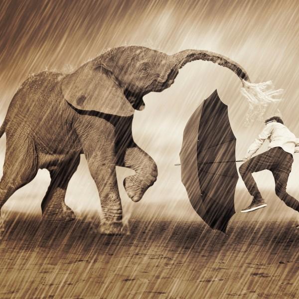 Elephant Rain Dance Photo