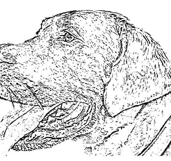 ReallyColor User Hall of Fame - Dog Coloring Page