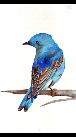 ReallyColor User Hall of Fame - Bluebird Photo