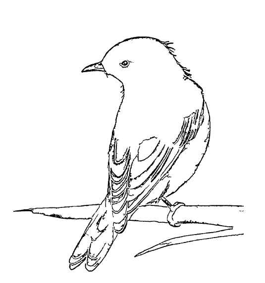 ReallyColor User Hall of Fame - Bluebird Coloring Page