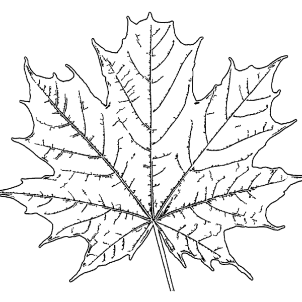 ReallyColor User Hall of Fame - Leaf Coloring Page