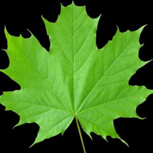 ReallyColor User Hall of Fame - Leaf Photo