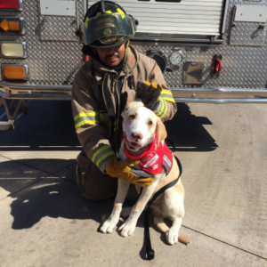 ReallyColor User Hall of Fame - Fireman Dog Photo
