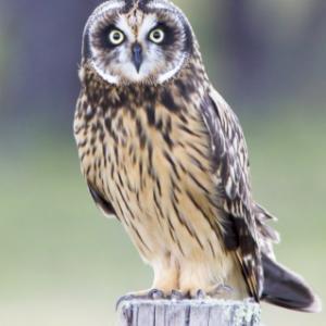 ReallyColor User Hall of Fame - Owl Photo