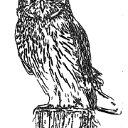 ReallyColor User Hall of Fame - Owl Coloring Page