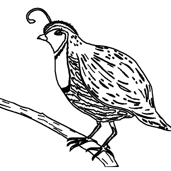 ReallyColor Hall of Fame - Bird Coloring Page