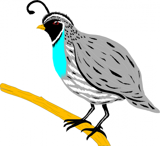 ReallyColor Hall of Fame - Bird Photo