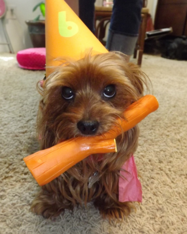 ReallyColor - Birthday Dog Photo